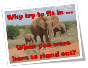 Why try to fit in when you were born to stand out